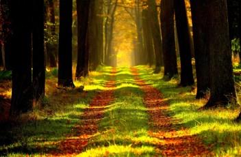 Suivre notre chemin de vie