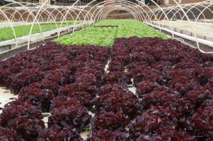 Kunia Country Farms Aquaponics