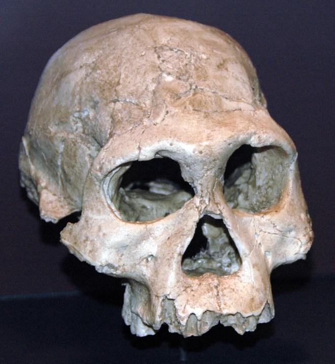 Homo georgicus photo