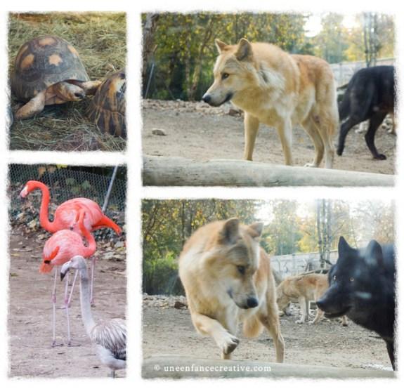 Zoo Mulhouse - loups