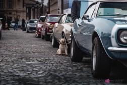 Photo Traversée de Paris hivernale 2021 chien
