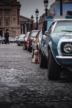 Photo Traversée de Paris hivernale 2021 chien ambiance