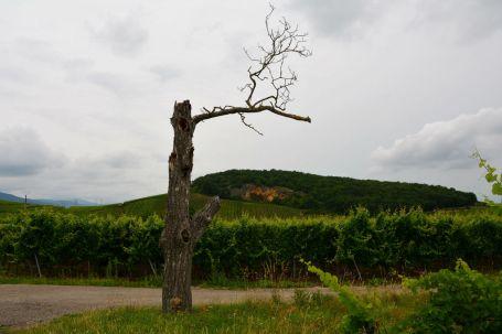 Parenthèse Vigneronne Kaysersberg Photo Céline Schnell Une Fille En Alsace