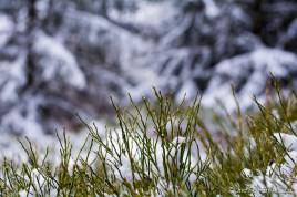lac_blanc-8