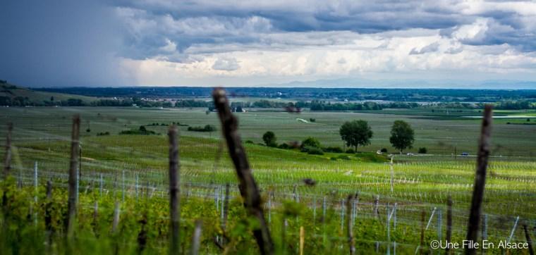 Vue sur le vignoble de Katzenthal pour Auto Rétro Vino