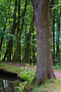 Forêt des Vosges du Nord