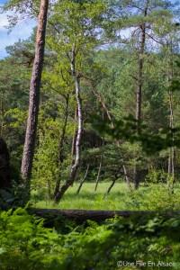 Randonnée dans les Vosges du Nord entre nature et vieilles pierres