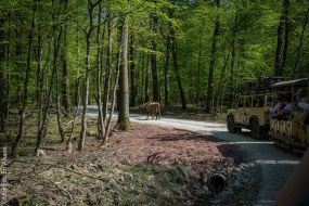 L'expédition Sauvage au Parc de Sainte Croix - Photo Céline Schnell Une Fille En Alsace