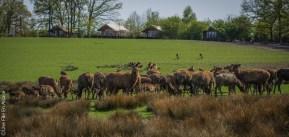 Les cerfs du Parc de Sainte Croix - Photo Céline Schnell Une Fille En Alsace