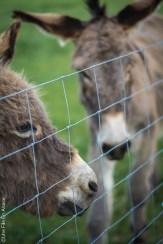 Les ânes de Terre Segala en Aveyron - Photo Céline Schnell Une Fille En Alsace