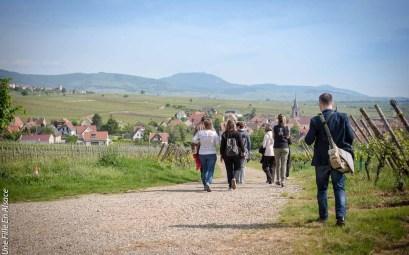 Parenthèse Authentique balade dans le vignoble vers Beblenheim ©Celine-Une-Fille-En-Alsace-2019-8