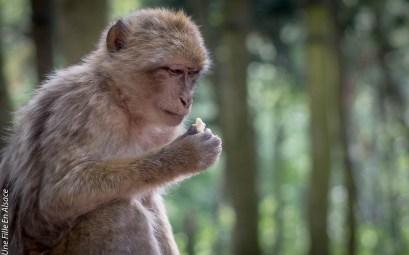 montagne-des-singes-kintzheim©Celine-Schnell-Une-Fille-En-Alsace-2019-19