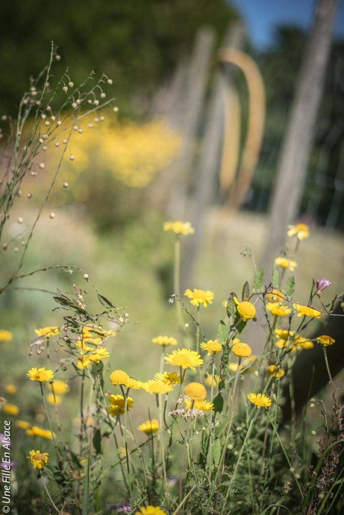 sortie-ecotourisme-la-villa-dehlingen©Celine-Schnell-Une-Fille-En-Alsace-2019-11
