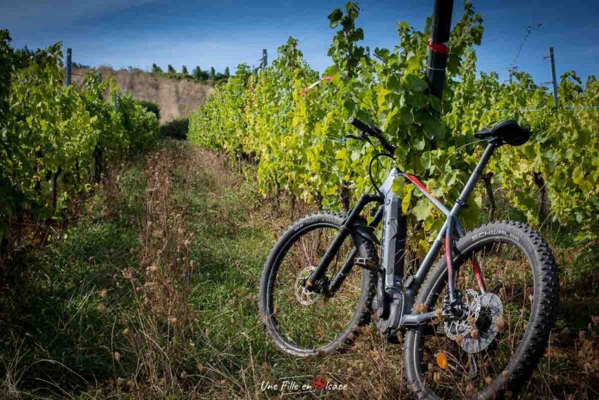 veloroute-vignoble-mittelbergheim©Celine-Schnell-Une-Fille-En-Alsace-2019-6
