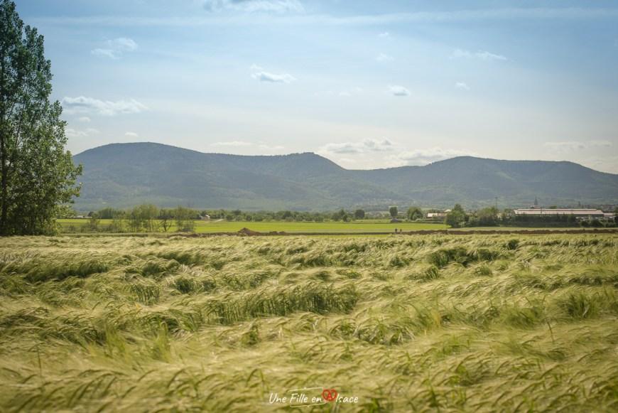velo-pays-de-sainte-odile-obernai@Céline-Schnell-Une-Fille-En-Alsace-2020