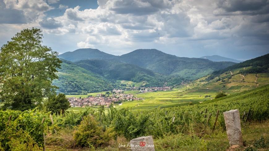 Grand Cru Mambourg- Sigolsheim@Céline-Schnell-Une-Fille-En-Alsace-2020