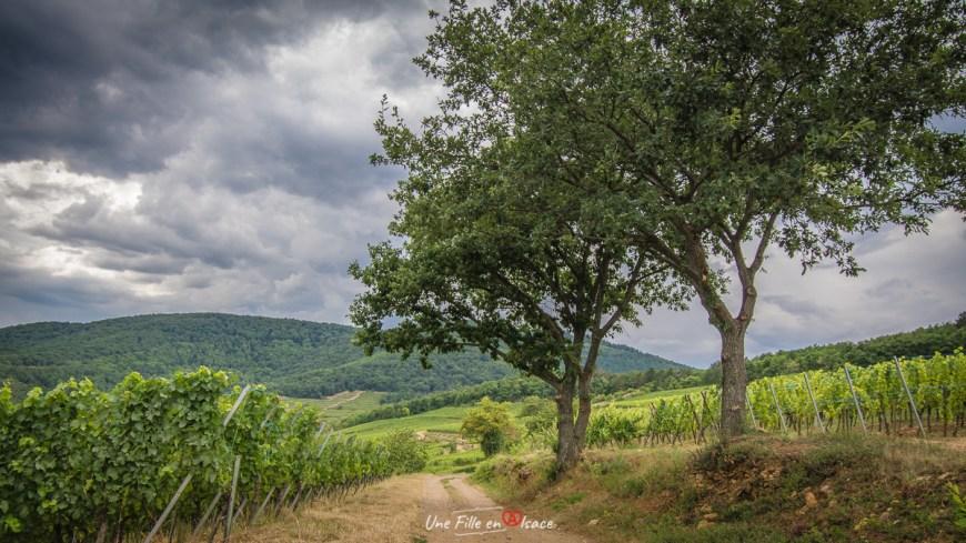Grand Cru Furstenturm Kientzheim@Céline-Schnell-Une-Fille-En-Alsace-2020