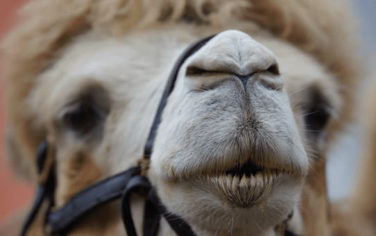 Sniffing Out Your Soulmate