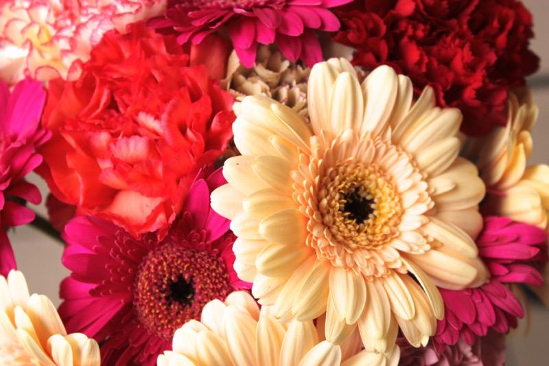 fleurs-roses-jaunes