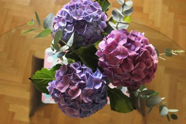 hortensias-violets