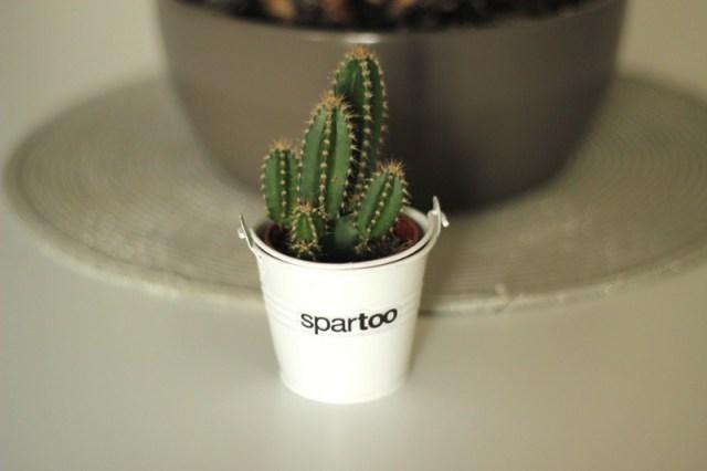 cactus-spartoo