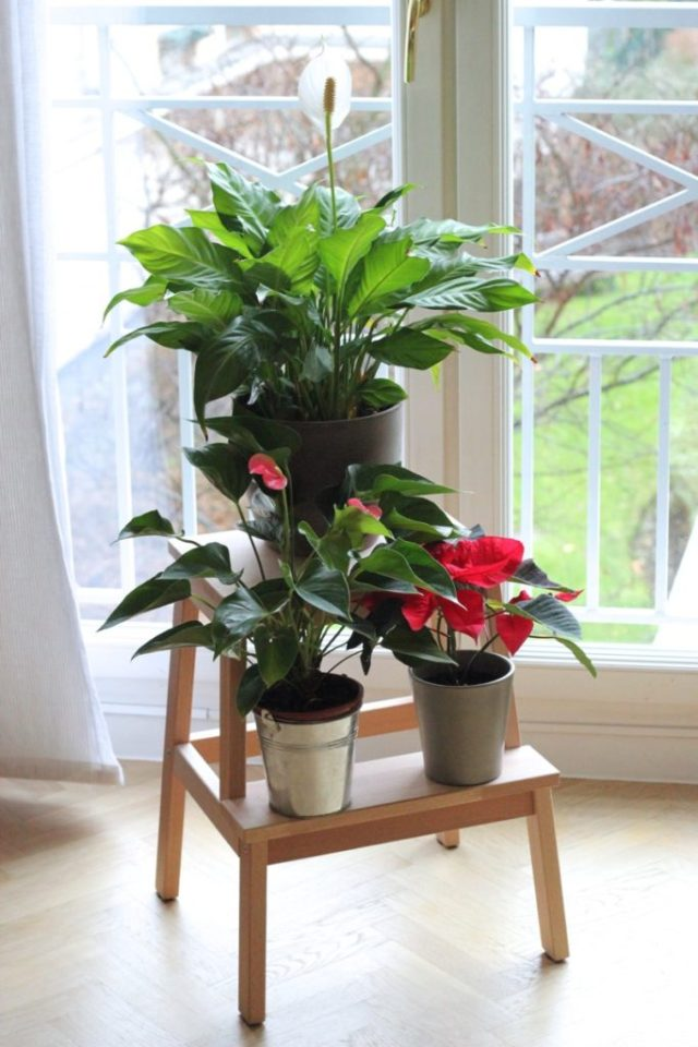 tabouret-plantes