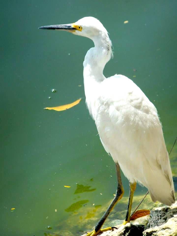oiseau villahermosa