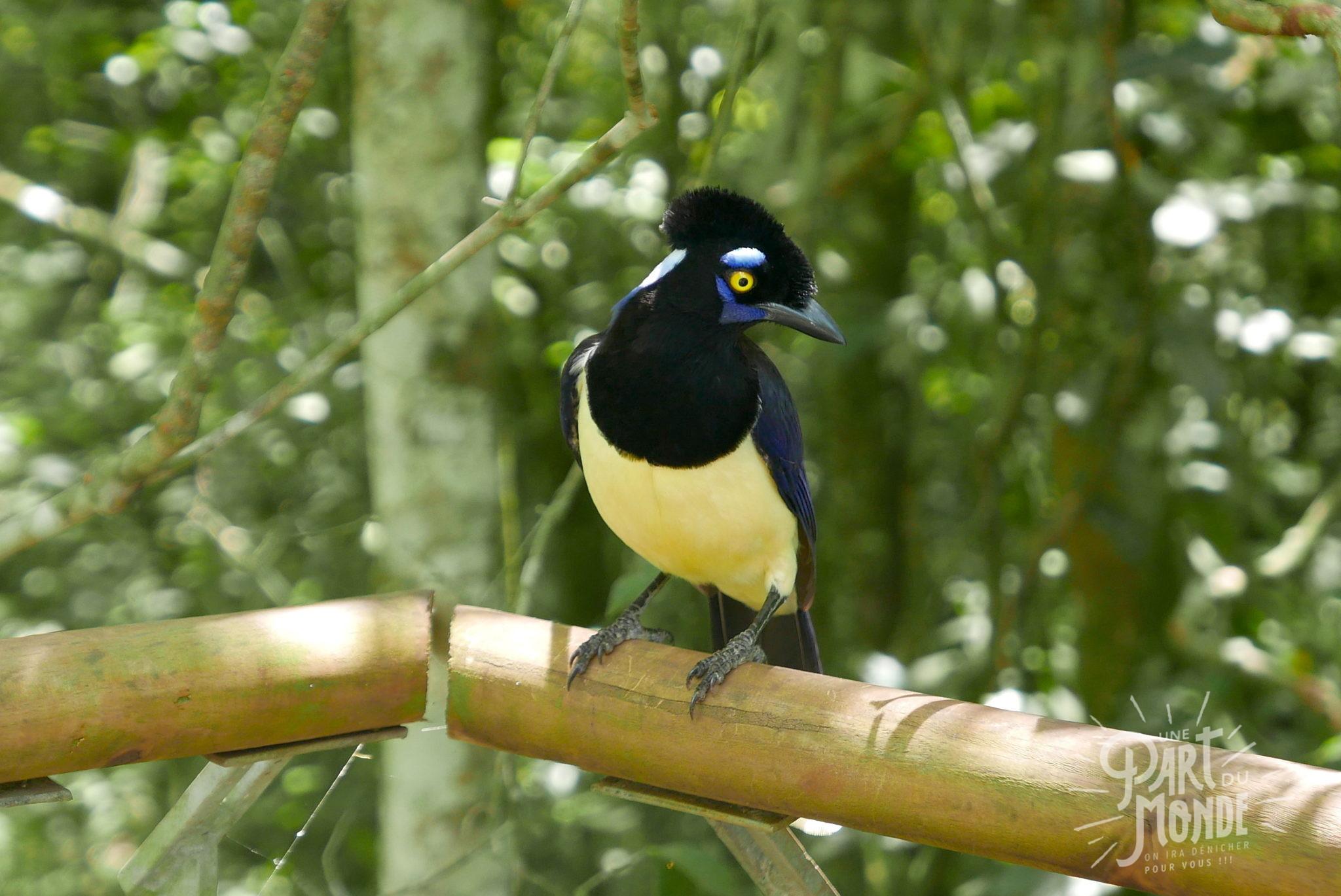 oiseau chutes d'iguazu côté argentin