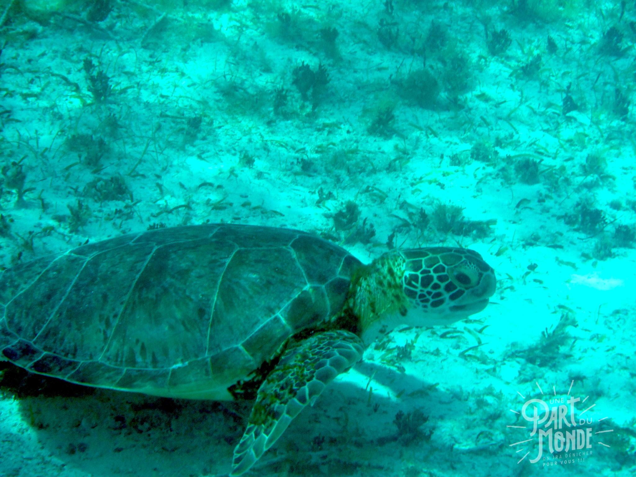 7 mois de voyage tortues - copie