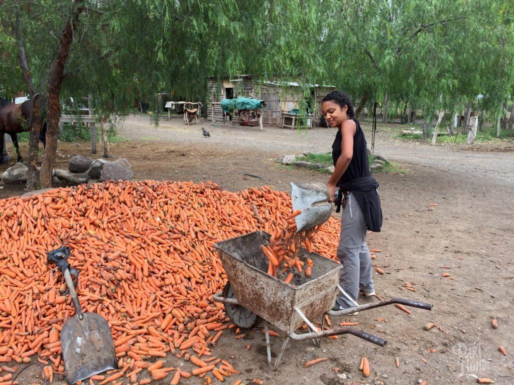 pelletage de carotte volontariat à mendoza