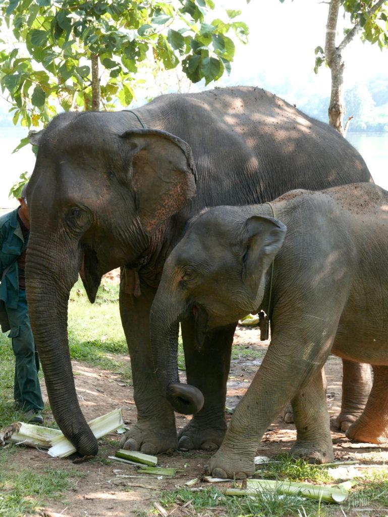 maman et bébé elephant conservation center