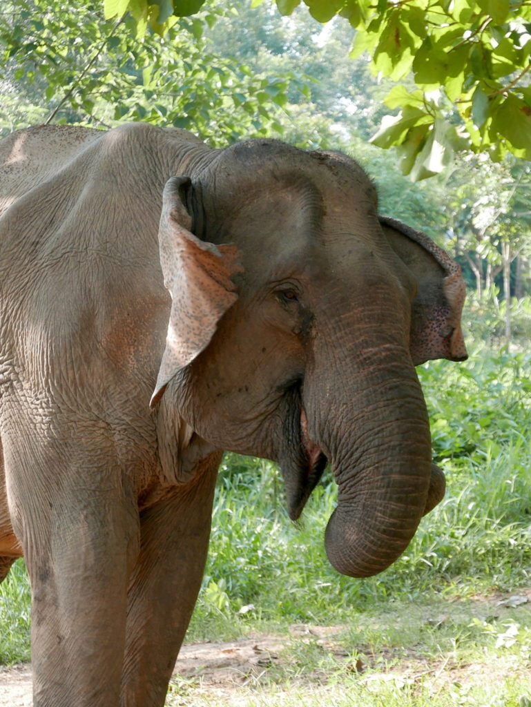 oreille elephant conservation center