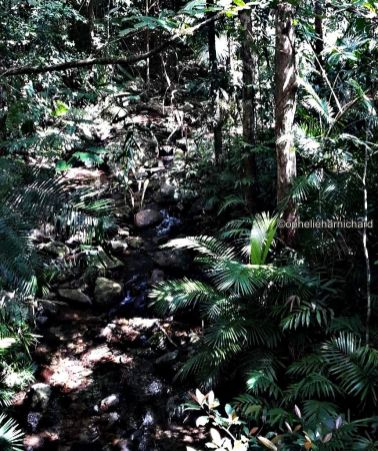 Photo of the rainforest in Mossman Gorge National Park