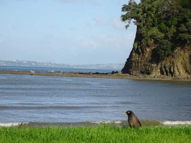 Photo-bird-sea-North-Island-New-Zealand