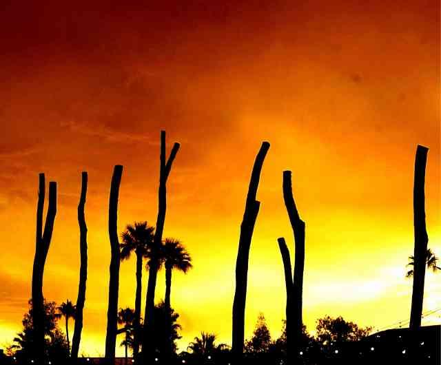 Artistic-photography-trees-silhouettes-sunset-orange