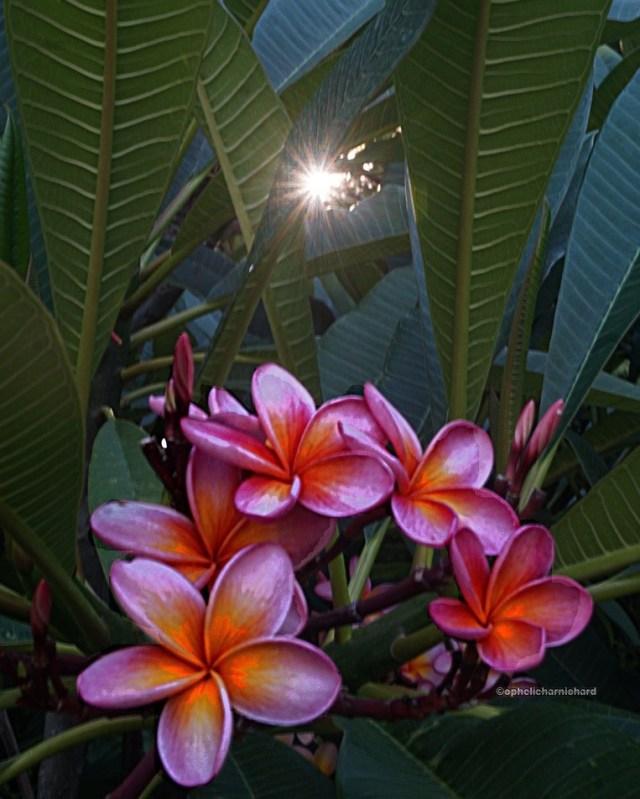 Art-photography-flowers-sun-Perth-Australia