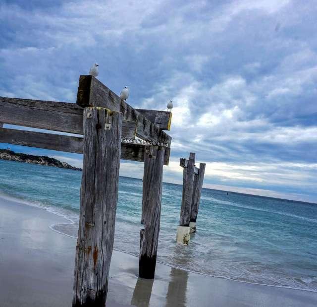 Landscape-photography-birds-sea-Hamelin-Bay