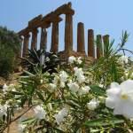 Een hete dag in Agrigento