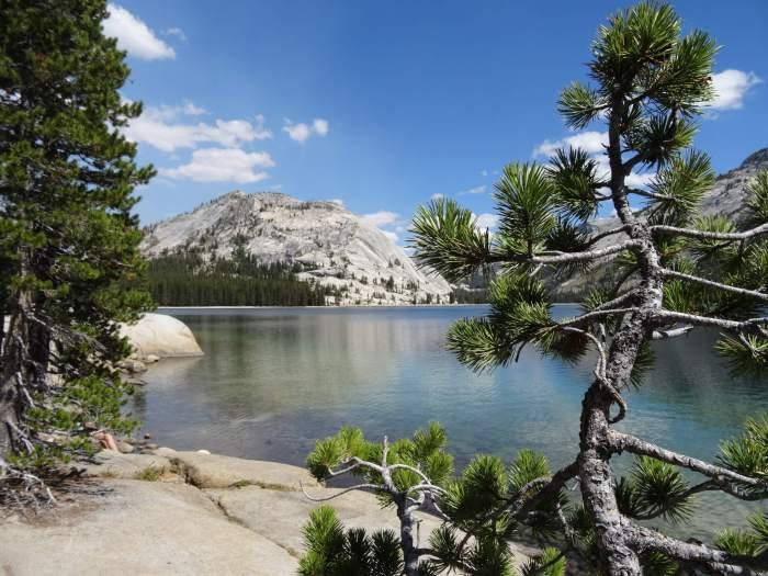 Naaldboom en kale rots omringen bergmeer in Yosemite NP