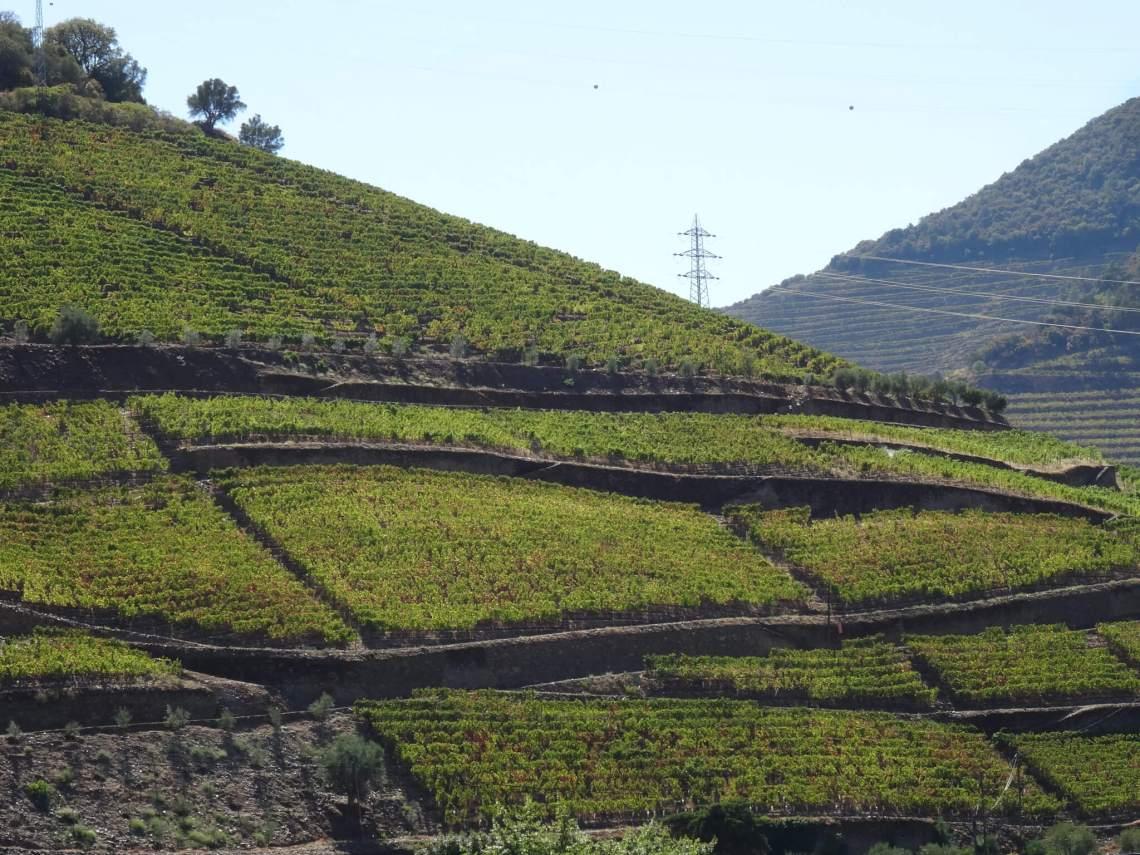 Heuvels met groene golvende wijnranken in Alto Douro