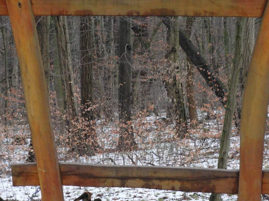 Zicht op beukenbos door vierkant van houten latjes
