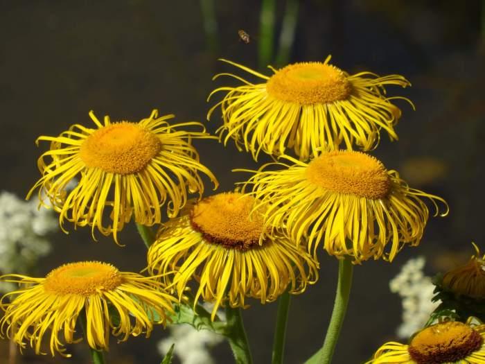 Geel bosje bloemen in bergpark Wilhelmshöhe