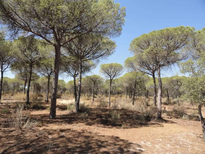 Zandvlakten en parasoldennen in natuurpark Doñana