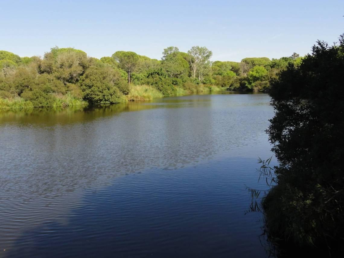 Bomen en struiken rondom meer van Acebró in natuurpark Doñana