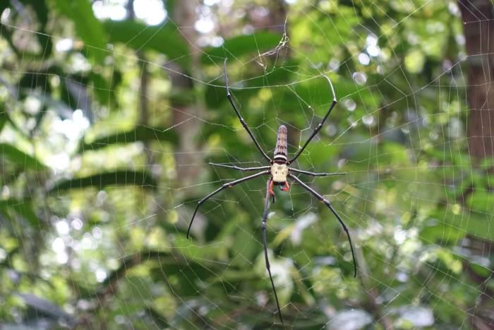 Grote spin in het web