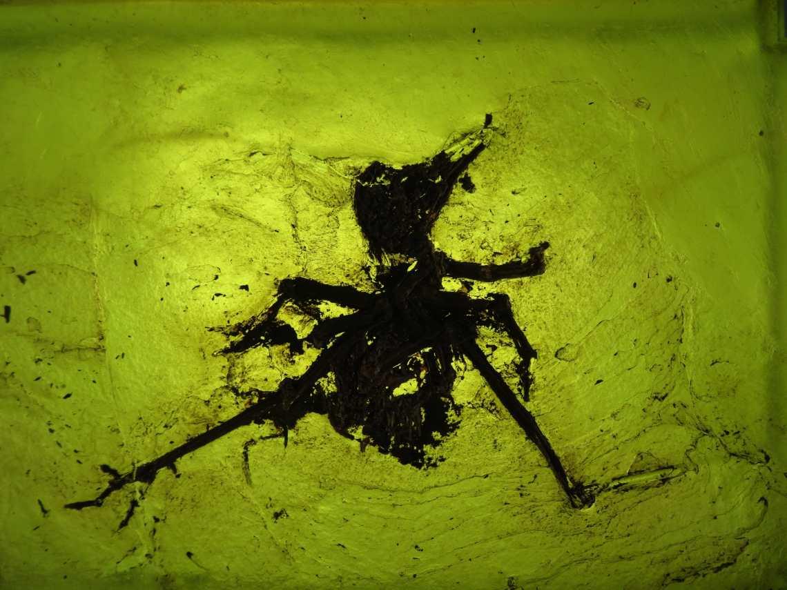 Fossielen vogel met gespreide benenop gele lichtgevende achtergrond