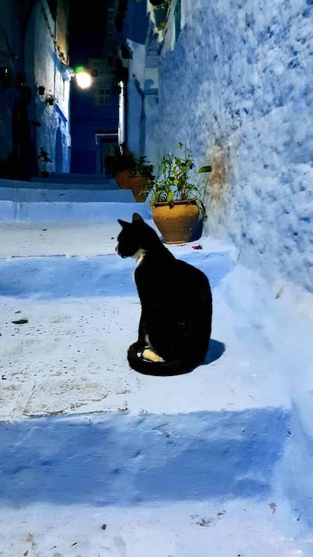 Un chat à Chefchaouen
