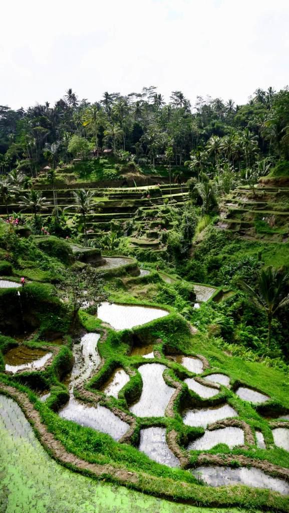 Terrasses des rizières de Tegalalang à Bali