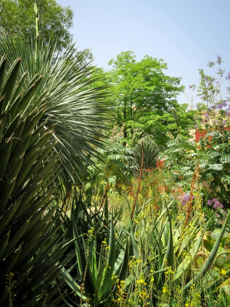 Jardin Tropical du Jardin Secret de Marrakech