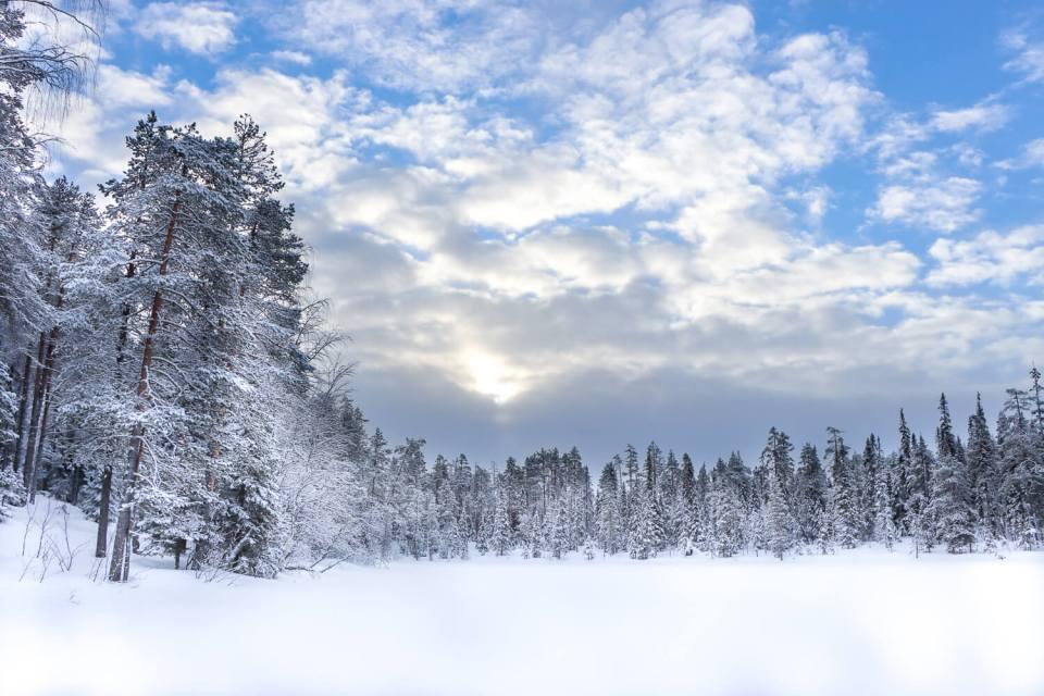 Forêt enneigée au bord du lac de la cabane de Jussinkämppä, parc national d'Oulanka, Laponie Finlandaise